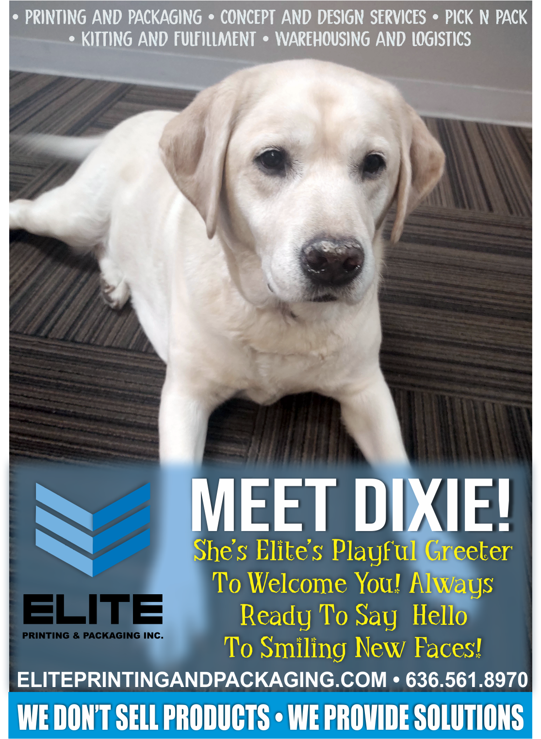 Dixie takes her job seriously as the friendliest office greeter!
